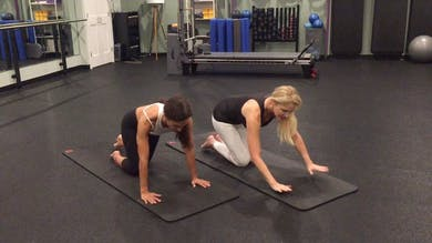All Fours Plank Progressions - Pro Tips by Zayna Gold Online