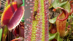 Grow Carnivorous Plants! Volumes 1, 2, and 3 by Sarracenia Northwest