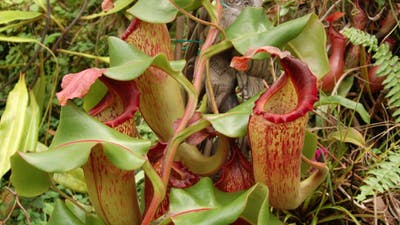 Grow Carnivorous Plants! Volume 3 by Sarracenia Northwest