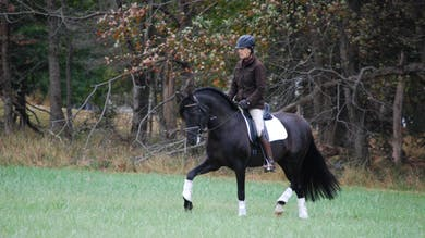 Felicitas von Neumann-Cosel - Riding Out, Part 1 by Dressage Today Online