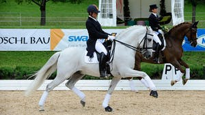 Walk and Canter Pirouettes with Juan Manuel Munoz Diaz by Dressage Today Online