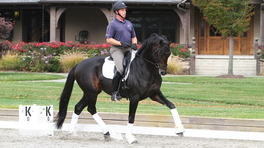 Scott Hassler - Four Year Old by Dressage Today Online