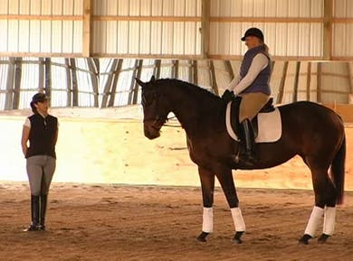 Basics by Dressage Today Online