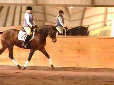 Canter quality by Dressage Today Online
