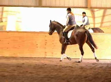 Working on forwardness by Dressage Today Online