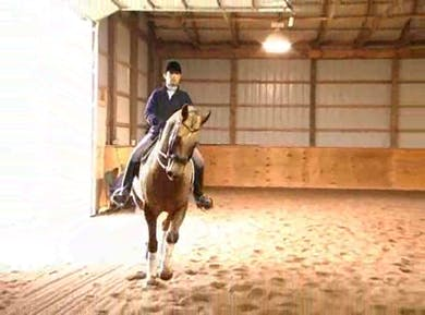 Lateral work, lengthenings by Dressage Today Online