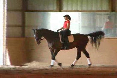 Warm up, all gaits by Dressage Today Online