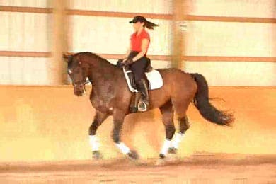 Beginnings of the 1/2 pass by Dressage Today Online