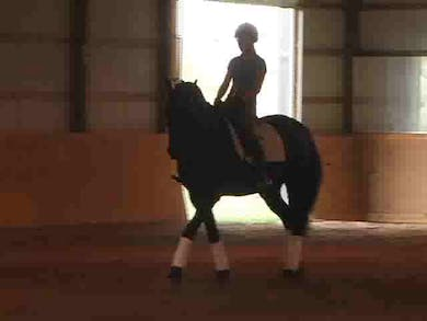 Lateral work. Improving the trot. by Dressage Today Online