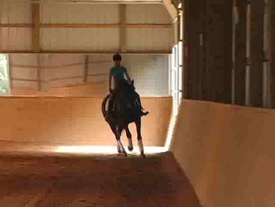 Canter work by Dressage Today Online
