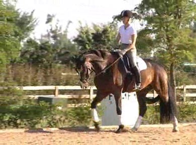 Working rest warm up and basics by Dressage Today Online