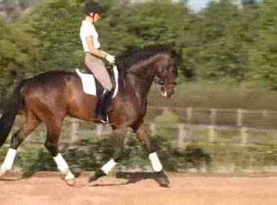 Instant Access to Gaits and counter canter by Dressage Today Online, powered by Intelivideo