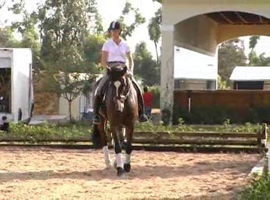 Lateral work by Dressage Today Online