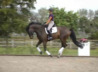 Development of the gaits by Dressage Today Online