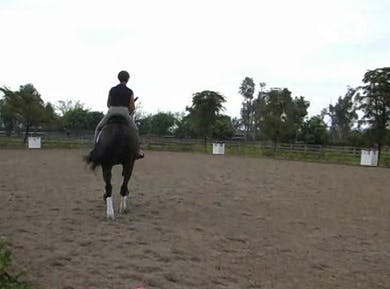 Basic work and understanding the feel of the horse by Dressage Today Online