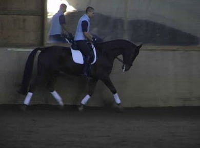 Basics, walk pirouette by Dressage Today Online