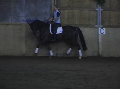 Lateral work, piaffe and passage by Dressage Today Online