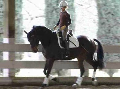 This is a super video to watch to understand what one can expect in terms of the  basic exercises you can ask your 4 yr. old to do, the type of compliance and willingness one can get and the frame that is comfortably created, watch the raised back and nic by Dressage Today Online