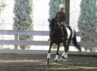 Suppling and looseness, work at the 3 basic gaits, a focus on correct transitions upward and downward by Dressage Today Online