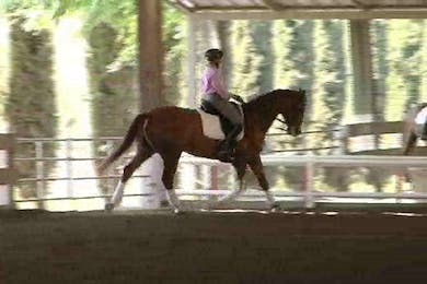 Developing and building the trot by Dressage Today Online