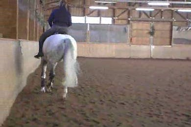 All gaits, using transitions, 1/2 pass, and zig zag by Dressage Today Online