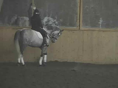 Walk, trot, canter, walk/canter transitions by Dressage Today Online