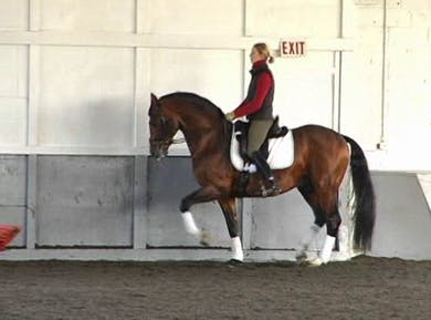 Gaits and development of piaffe/passage. Riding in and out of the passage, piaffe, passage improving the transitions. Making the trot more expressive. by Dressage Today Online