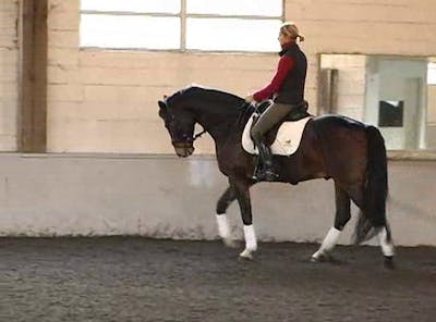 Instant Access to Gaits and development of piaffe/passage by Dressage Today Online, powered by Intelivideo