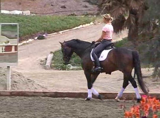 Instant Access to Suppling, creating lightness and training for sensitivity to your aids by Dressage Today Online, powered by Intelivideo