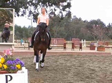 More trot development, training the harmony between specific horse and rider by Dressage Today Online