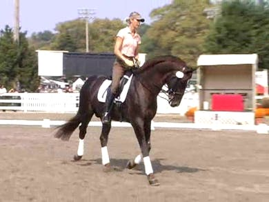 Warm up, stretching and suppling by Dressage Today Online