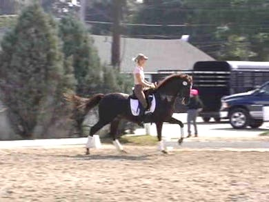 Working on canter pirouettes by Dressage Today Online