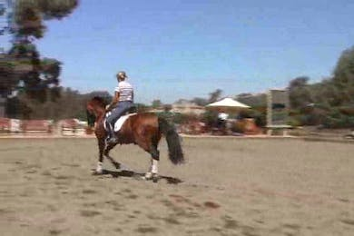 Category/Movement/Lateral| by Dressage Today Online