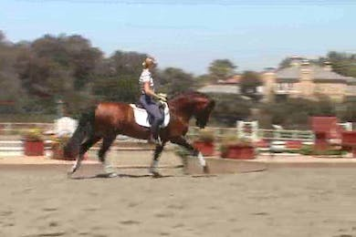 Tempi changes by Dressage Today Online