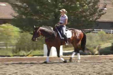 Trot work, pay attention to the trot you see and then watch last years video to compare. Wow what a difference! by Dressage Today Online