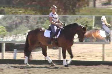 Preparing for the pirouettes. Specifics on the walk pirouette. How to correct typical mistakes. Creating the trot and 1/2 steps. by Dressage Today Online