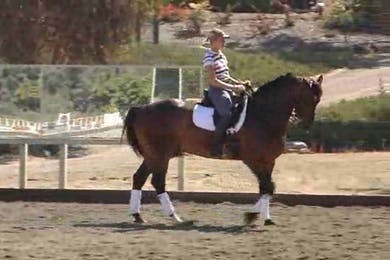 Walk pirouettes by Dressage Today Online