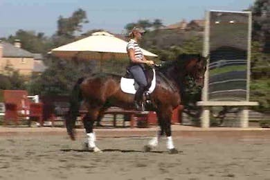 Canter pirouettes by Dressage Today Online