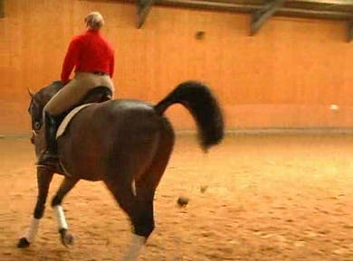 Warm up, basics by Dressage Today Online