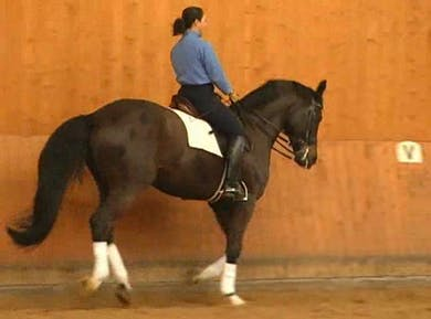 Counter canter and flying changes by Dressage Today Online