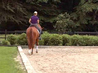 Training the young horse, weight aids, correct bend, balance by Dressage Today Online