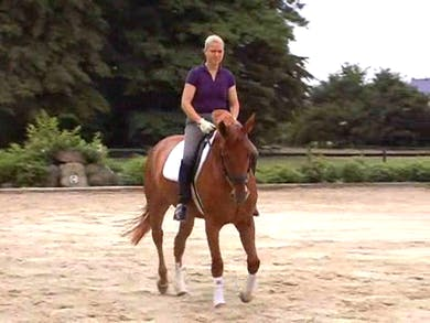 Using the working seat vs. collecting seat, lengthenings and transitions by Dressage Today Online