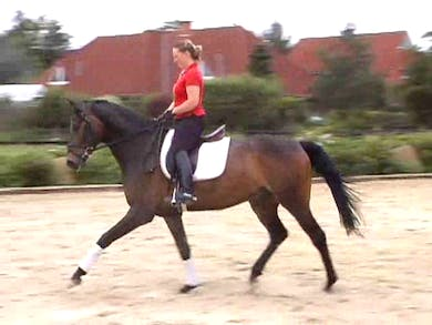 training the young horse, forward, straight, balanced and obedient by Dressage Today Online