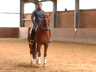 Category/Specialty/Musical Freestyle - KÙr| by Dressage Today Online