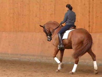 Catherine and Maximus show us pieces of the freestyle by Dressage Today Online