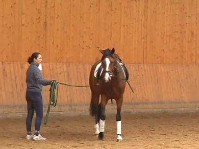 Mounting the newly broke horse. The rid...use of straight lines. Dealing with disobedience. by Dressage Today Online