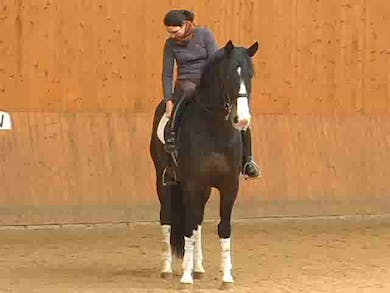 Explanation of the canter aid she uses to obtain rhythmical tempi changes. Work on the canter pirouettes. Piaffe work. by Dressage Today Online