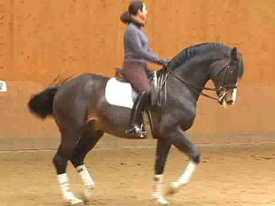 In depth piaffe work. by Dressage Today Online