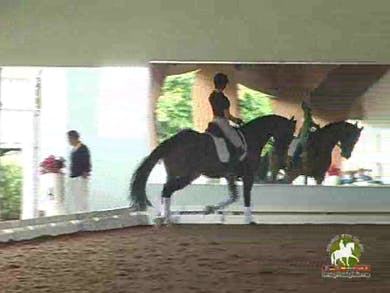 Shawna Harding, part 1, day 2 by Dressage Today Online