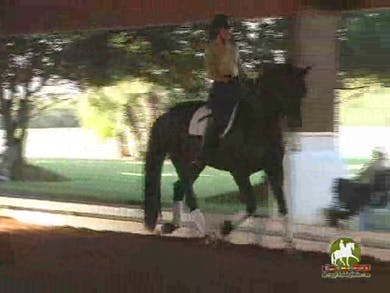 Linda, part 3, day 2 by Dressage Today Online